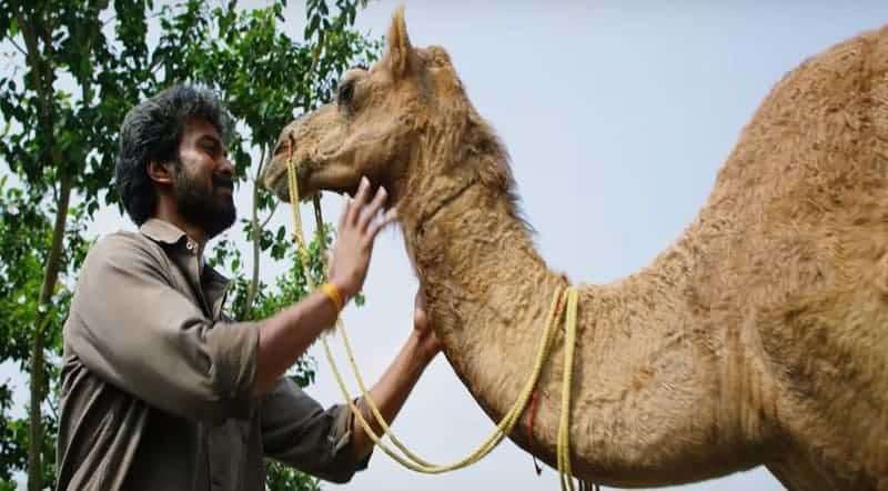 Karadu Moradu Poove Song Lyrics From Bakrid